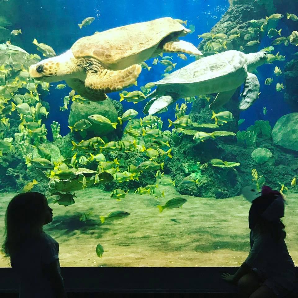 Sea World field trip